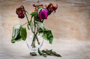 Dead roses in a vase